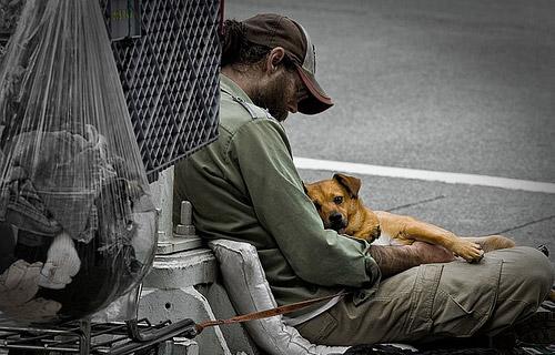 homeless-dog-9 (1)